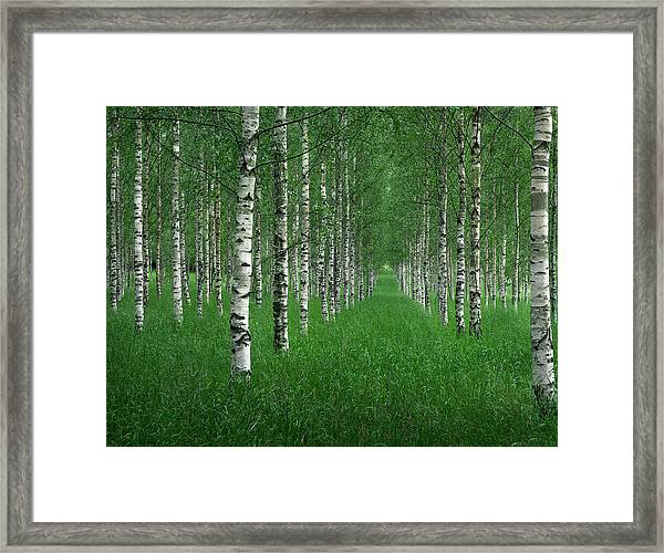The Tunnel Framed Print by Christian Lindsten