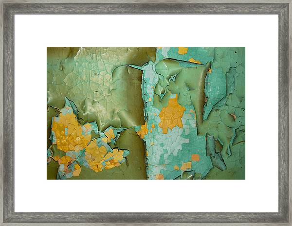 The Turtle And The Frog Framed Print