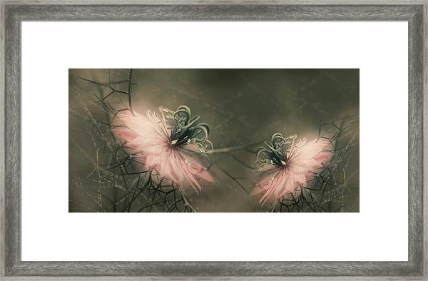 The Virgins Framed Print by Heidi Westum