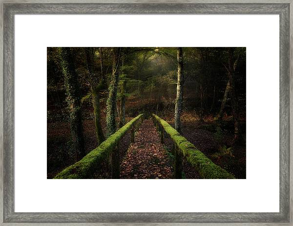 The Way To The Forest Framed Print