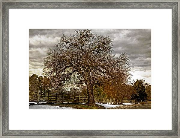 The Welcome Tree Framed Print