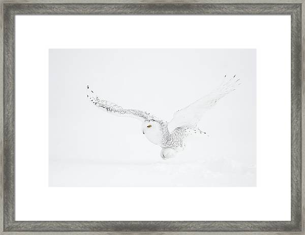 The White Ghost Is Coming Framed Print by Marco Pozzi