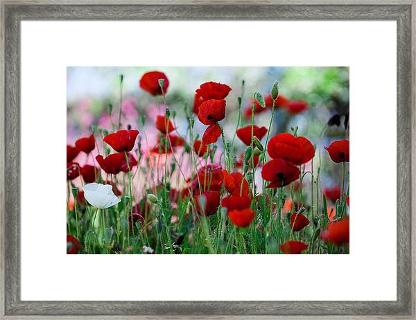 The Whiter Shade Of Pale  Framed Print
