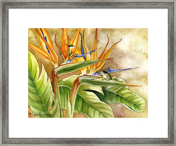 The Windsurfers Framed Print