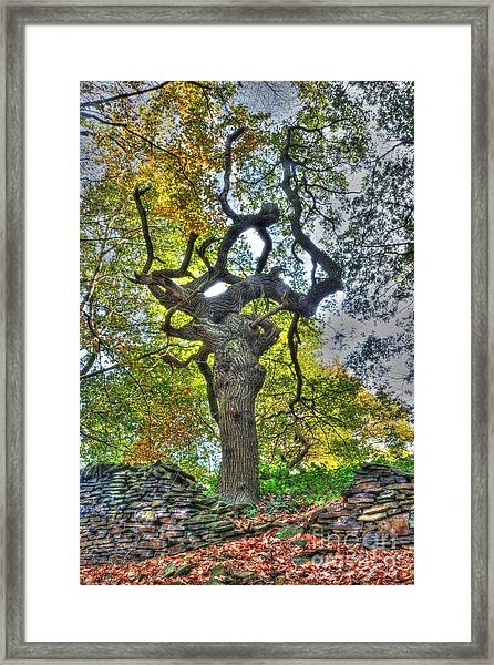 The Witches Tree Framed Print