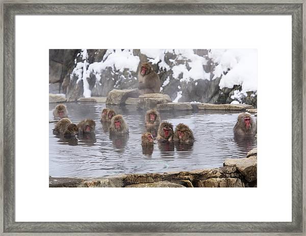 The World Of Snow Monkey Framed Print