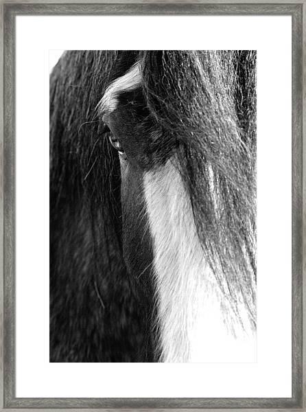 Theoden In Bw Framed Print