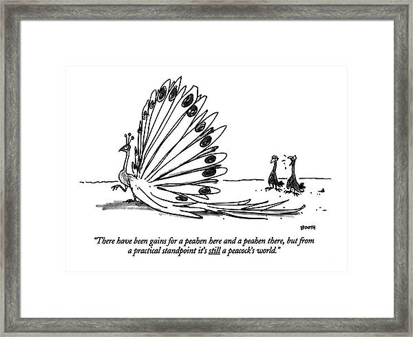 There Have Been Gains For A Peahen Here Framed Print