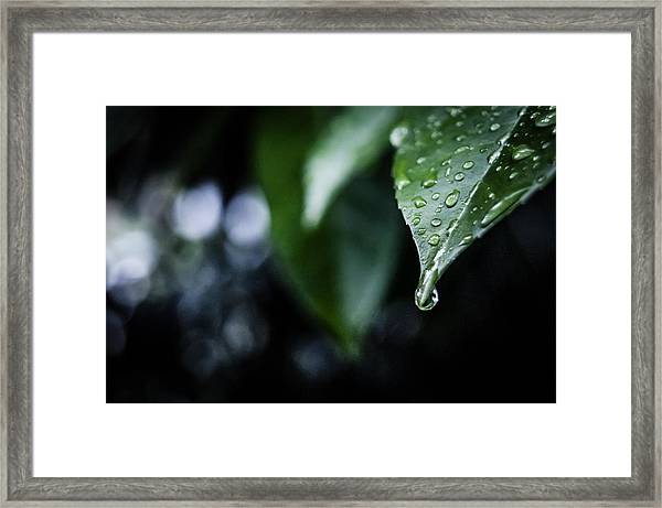 They All Fall Down Framed Print