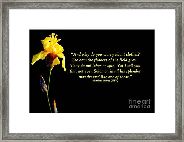 They Do Not Labor Or Spin Framed Print