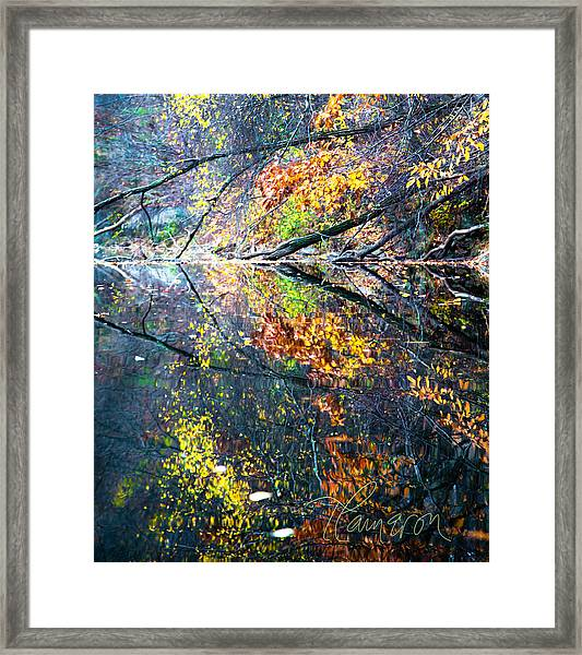 They Wink At Me Framed Print