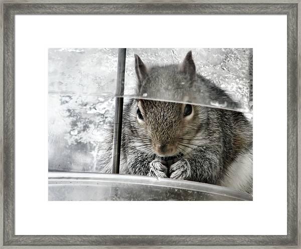 Thief In The Birdfeeder Framed Print