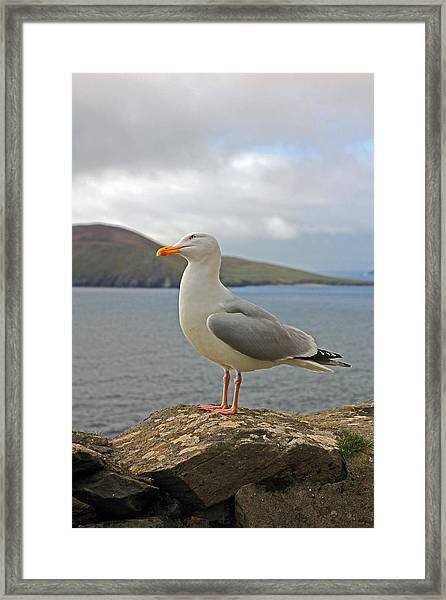 Things Are Looking Up Framed Print