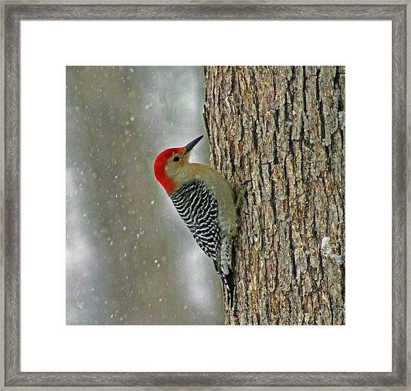 This Is My Tree Framed Print