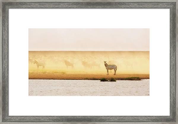 This Is Ndutu Framed Print