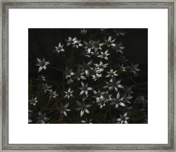 This Year's Bloom Framed Print