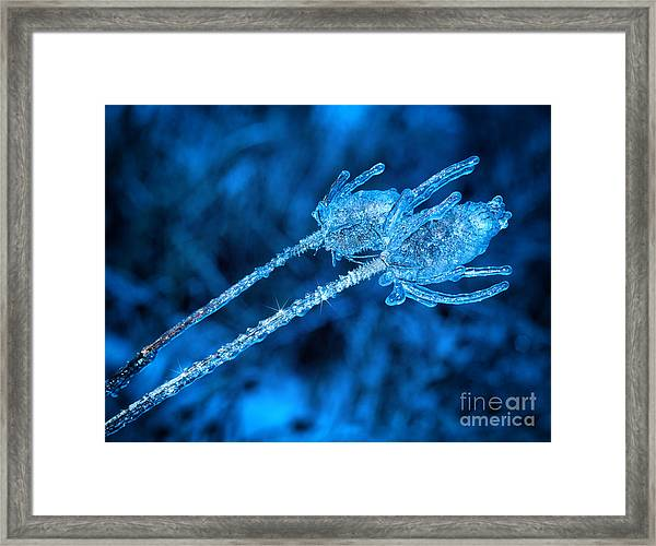 Thistle Plant On Icy Night Framed Print