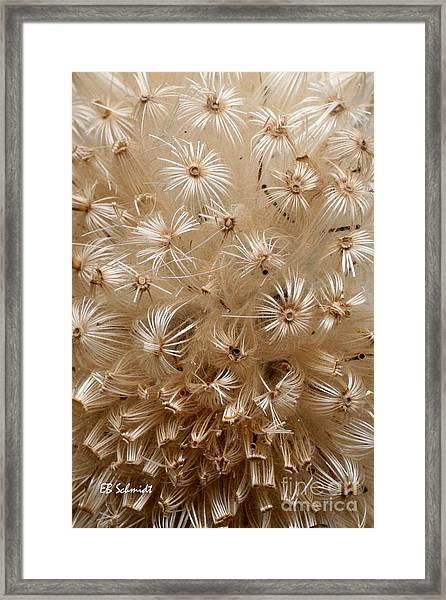 Thistle Seed Head Framed Print