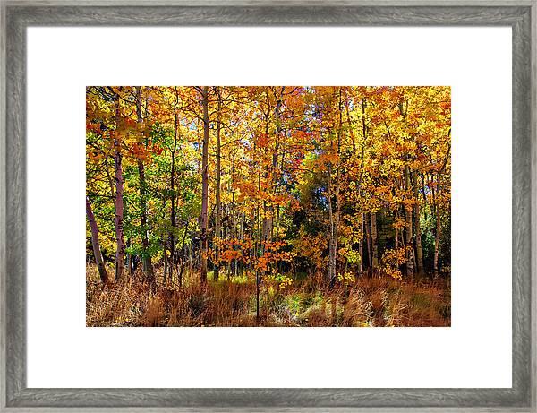 Thomas Creek Fall Color Framed Print