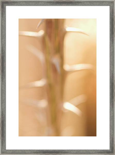 Thorns On The Stem Of An Ocotillo Framed Print