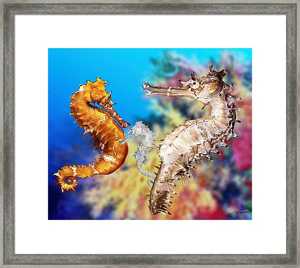 Thorny Seahorse Framed Print by Owen Bell