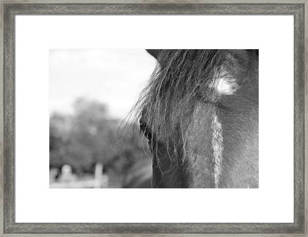 Thoroughbred B/w Framed Print