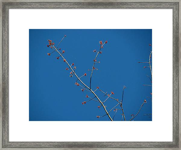 Threads And Buds Framed Print