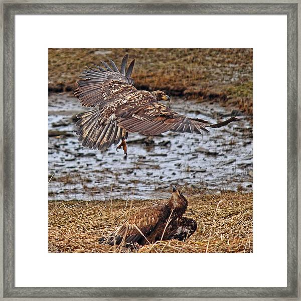 Framed Print featuring the photograph Threat From Above by Randy Hall