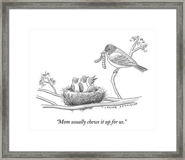 Three Baby Birds In A Nest Talk To A Grown Bird Framed Print