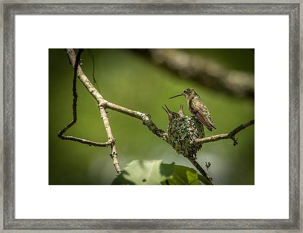 Three Beaks Framed Print