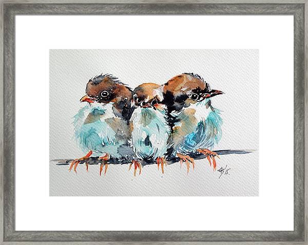 Three Birds Framed Print