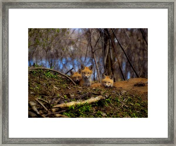 Three Cute Kit Foxes At Attention Framed Print