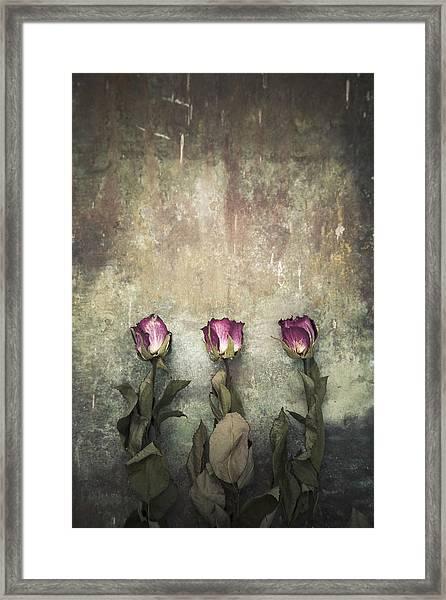 Three Dried Roses Framed Print
