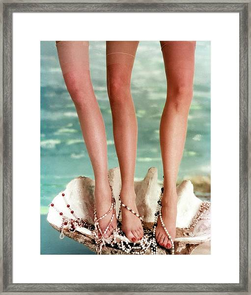 Three Legs Standing In A Shell Framed Print by John Rawlings
