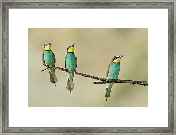 Three Little Guys On The Tree Framed Print
