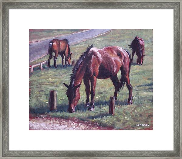 Three New Forest Horses On Grass Framed Print