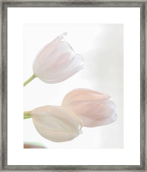 Three Sisters Reversed Framed Print