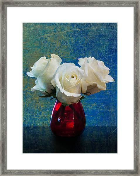 Three White Roses Framed Print