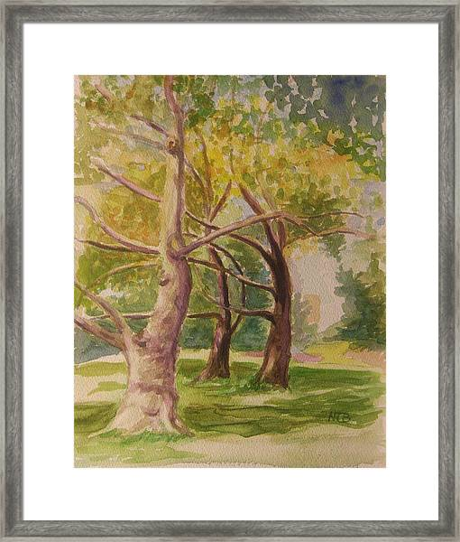 Threesome In Central Park Wc Framed Print