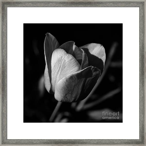 Threshold - Monochrome Framed Print