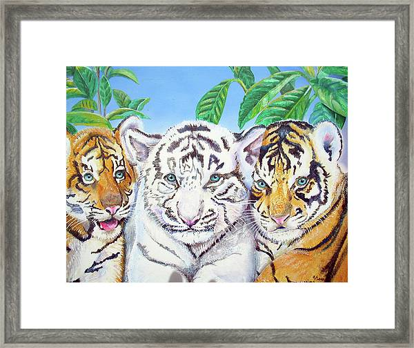 Tiger Cubs Framed Print