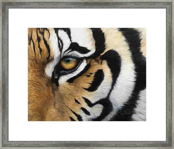 Tiger Eye Framed Print