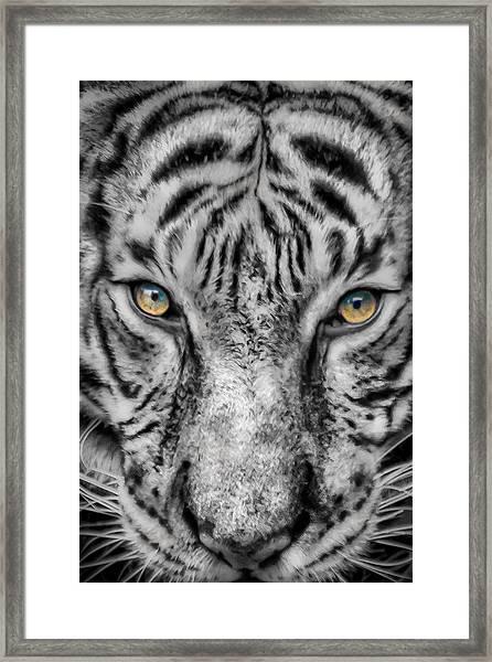 Tiger Eyes Framed Print by James Woody