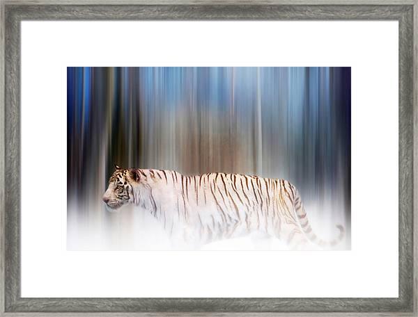 Tiger In The Mist Framed Print