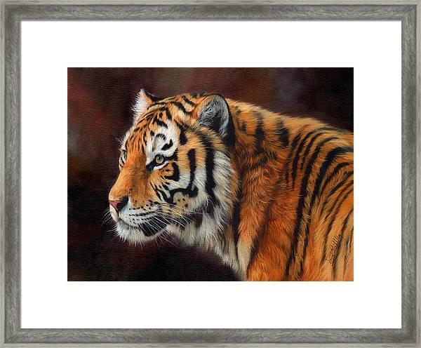 Tiger Portrait  Framed Print