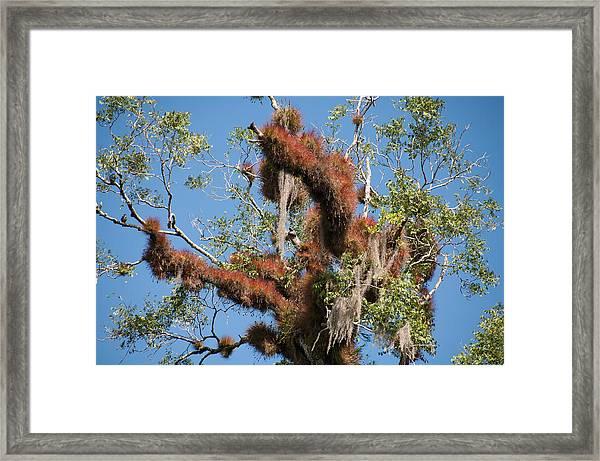 Tikal Furry Tree Closeup Framed Print