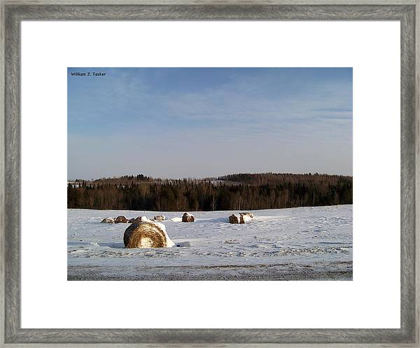 Till The Cows Come Home Framed Print