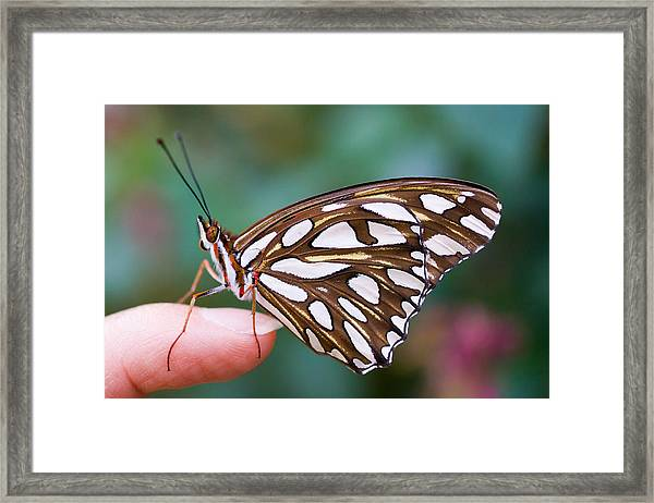 Framed Print featuring the photograph Time To Fly by Priya Ghose