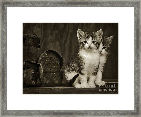 Tin Can Alley Cats  Framed Print