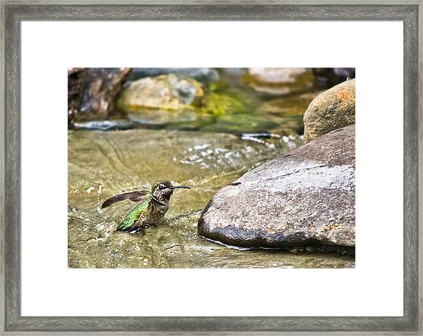 Framed Print featuring the photograph Tiny Bather by Priya Ghose